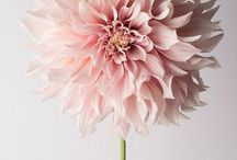 A florists dream