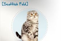 Breed All About It: Cats / Learn more about the cat breeds that pet parents all across the world call kitty companions - and their common health problems