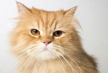 Cat-astrophes Averted / Meet some #PetplanProtected feline family members who stared injury and illness in the face and lived to meow about it - will all nine lives intact thanks to Petplan cat insurance