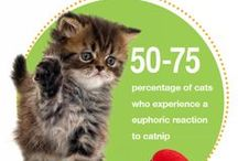 Pet Stats / Unusual measure-mutts, surprising cat-tistics and furry facts  from all around the animal world!