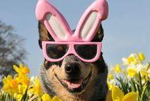 """Hoppy Easter / Celebrating the """"bunniest"""" best friends on Pinterest"""