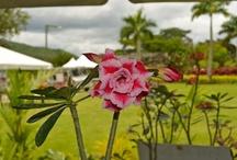 Recorrido por el Jardín Botánico de Caguas / by MiPuertoRicoVerde.com