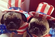 Patriotic Pets / Meet some of the furry nation's most patriotic pets!