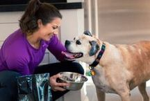 Olympic Pets / Honoring the four-legged athletes that keep Olympic stars shining all year round