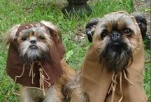 Star Wars Pets / May the fur be with you!