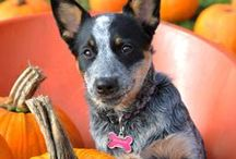 Fall - In Love / Our favorite fall pet pictures from Petplan family members and around the web