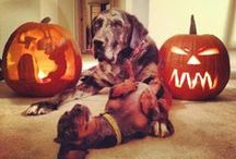 Howl-o-Ween Pets / Cute pet Halloween costume pictures from Petplan furry team members and our pet pals around the web!