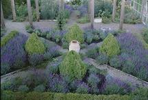 Gardening / Pinning politely is appreciated. / by Elizabeth Finney