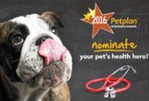 Petplan Vet Awards / Meet America's favorite veterinary professionals - as voted on by YOU in the Petplan Veterinary Awards!
