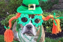 Saint Patrick's Day Pets / Sharing our favorite Saint Patrick's Day pet pictures from Petplan pet insurance family members and friends around the web! Send your pics to socialmedia@gopetplan.com for the chance to win a prize! Winner paw-picked at random on March 29, 2013!