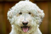National Dog Day / Celebrating all things dog on National Dog Day!