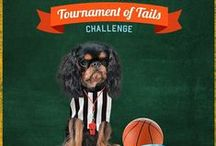 Tournament of Tails / Shelters, rescues and humane societies give 110% to help pets rebound from adversity and find fur-ever homes. Tournament of Tails is your chance to cheer them on — while raising awareness and much-needed funds for the underdogs (and cats!) they serve. Vote for your favorite adoptable pets in our March Madness-style bracket to help one deserving rescue earn a $5,000 donation!