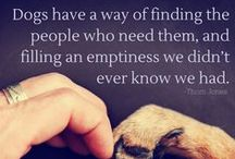 Animal Quotes We Love / Quotes, sayings, and phrases that beautifully explain why we love our pets so much.