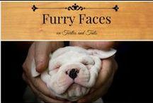 Furry Faces