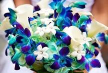 Alicia's Wedding ideas / by Traci Higbee