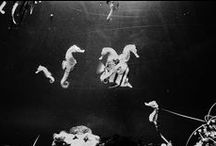 Sea // Monsters / by Hopeless Lingerie