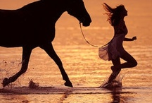 Hold On To Your Wild Horses / by Audelia Vasquez
