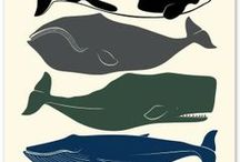 Whales! / by Adrienne Thompson