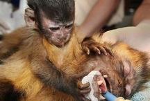 STOP ANIMAL ABUSE! / by Audelia Vasquez