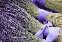 All things Lavender / by Bonelli Fuller
