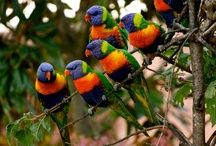 Beautiful Birds / I love birds, I am fascinated by the different species and their beautiful colors