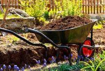 Gardening / by Debbie Snider