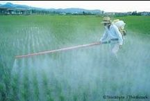 Monsanto - GMOs / Anything About Monsanto/GMOs