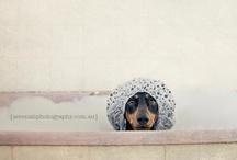Critters / by Diane Bracher