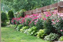 Backyard Project / by Colleen Sicuso