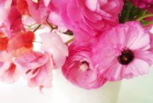 {Bloom} / by Kelly Margaret