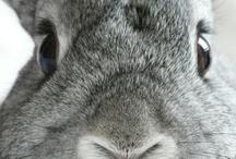 thuis met Moon * bunny / my favorite pet