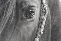 {Animals and Nature} Neigh! / by Harmony L. Courtney