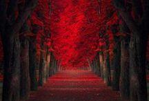 {seasons} Autumnesque- Autumn season and holidays / Autumn, Halloween/ All Hallow's Eve, All Saints Day, Thanksgiving / by Harmony L. Courtney