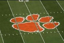 tiger nation / by Lisa Wooster