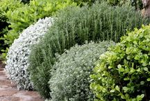 Planting styles