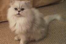Our Feline Friends / Video Clips, Pictures with the Awwhh Factor!