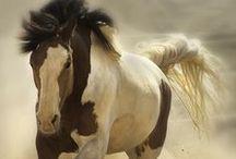 My Kingdom for a Horse / by Kimberly Kincaid