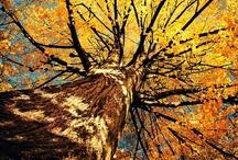 Fall! / by Hannah Jacobson