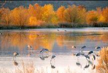 NM Birding / Birds I see around the Sandia Crest and the surrounding area in NM.