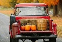 Ode to Autumn / All things fall that inspire warmth,walks and wooly sweaters..