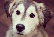::Puppy Love:: / by Esther Eddy