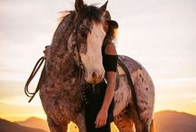 Horses and tack / by Bailey Duxworth