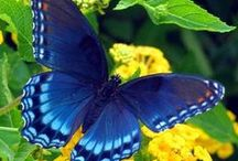 Butterflies / Beautiful winged creatures / by Cindy Bugg