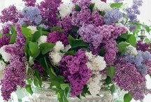 Lilacs / by Cindy Bugg