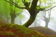 Awesome Earth / Images portraying the beauty of nature