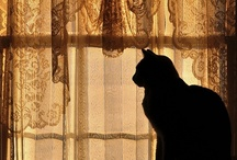 Cats / by Diana Freeman