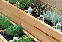 Gardening ideas / Flowers and Plants and other garden ideas