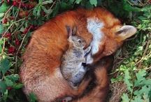 The Bunny and the Fox
