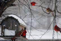 Winter Wonderland / by Bailey Duxworth