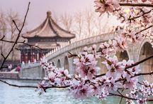China Trip / by Kelly Kalinkewicz